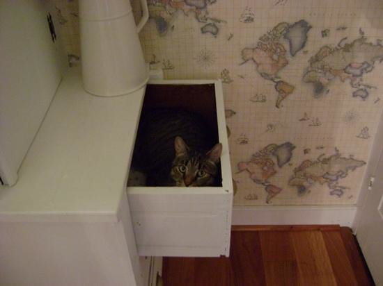 Snow Squall Bed and Breakfast: kitty cat likes to sleep in the hall drawer!