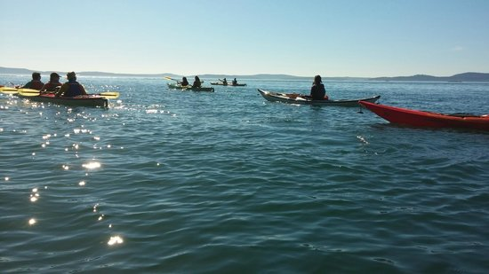 Anacortes Kayak Tours: End of the trip. Such a beautiful tour!