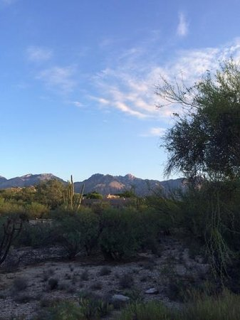 Canyon Ranch in Tucson: View from my room!