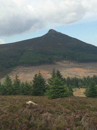 Bennachie Hill Walks: Mither Tap from Millstone Hill