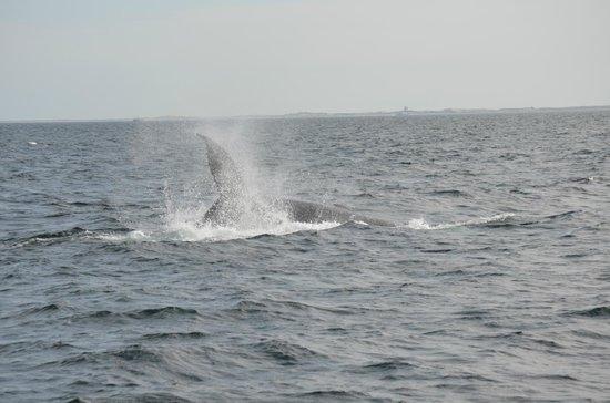 Dolphin Fleet Whale Watch : Whale near the ship