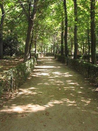 Parque del Retiro: filtered light on a path