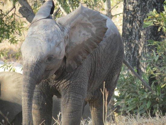 Dulini River Lodge : Elephants at Sabi Sands