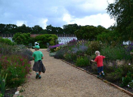 Somerleyton Hall and Gardens: Lovely gardens