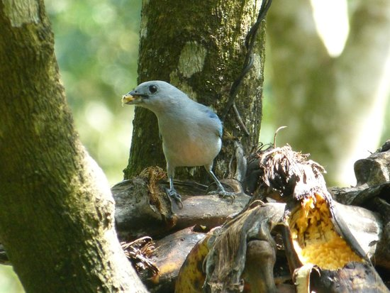 Hostería La Roulotte: birds