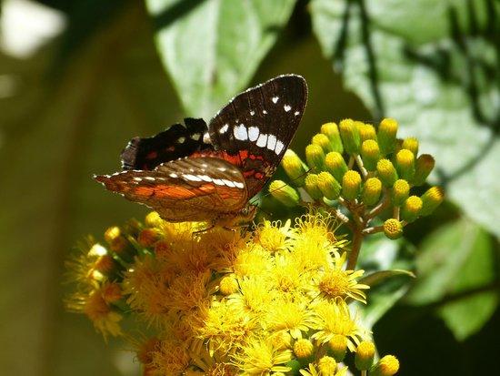 Hostería La Roulotte: many butterflies!