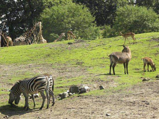 Northern Zoo: Savanna