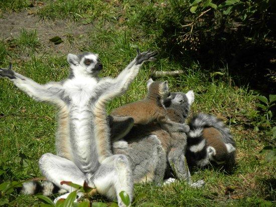 Northern Zoo: Praise!