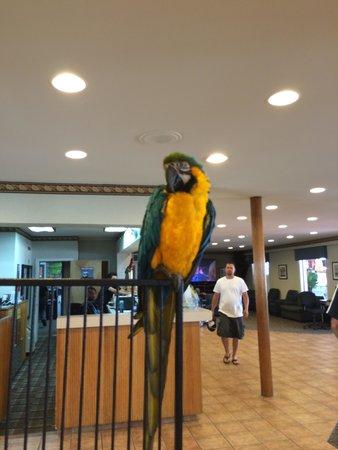 Plim Plaza Hotel: Dakota