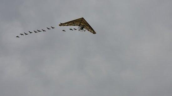Le Puy du Fou : Le Parc est survolé par cet Ulm suivi d'oies qui le suivent en formation de vol