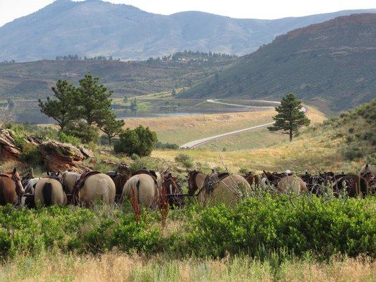 Sylvan Dale Guest Ranch: Ranch