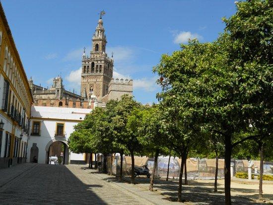 Torre Giralda : vue du jardin de la cathedrale