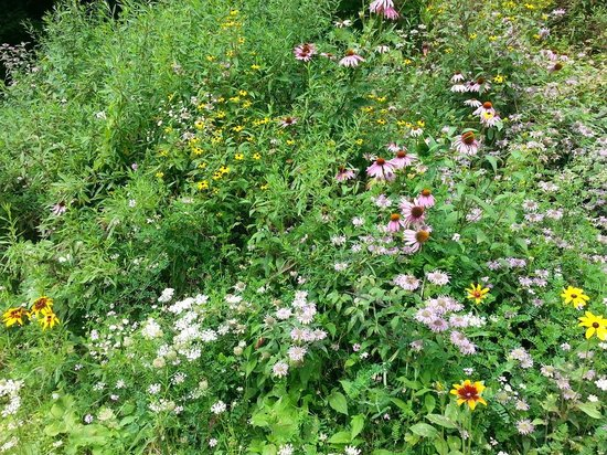 The Ira Allen House Bed and Breakfast: Wildflowers in the parking lot