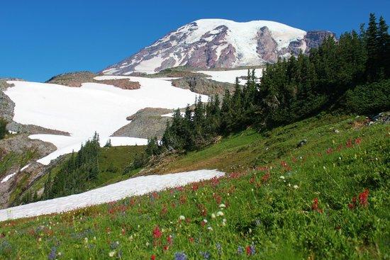 Skyline Trail : View of Mt Rainier with wild flowers