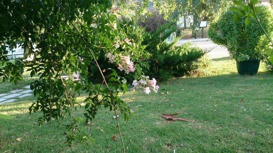 Jerry's Elliniko: Stunning flowers,here