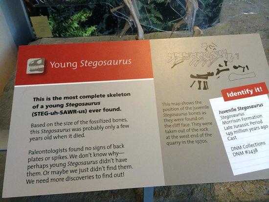 Dinosaur National Monument: About the baby Stegosaurus