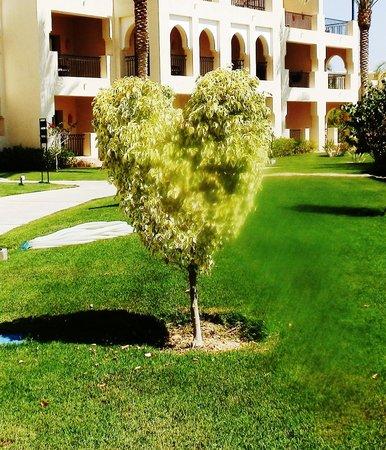 Jaz Lamaya Resort: Tree art