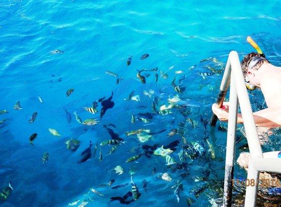 Jaz Lamaya Resort: Fish by the jeti