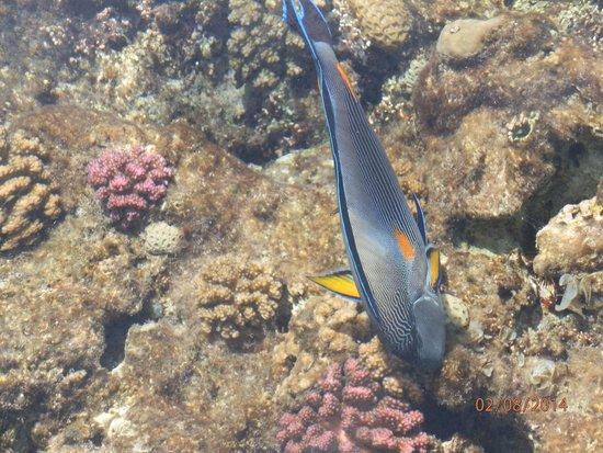 Jaz Lamaya Resort: Fish