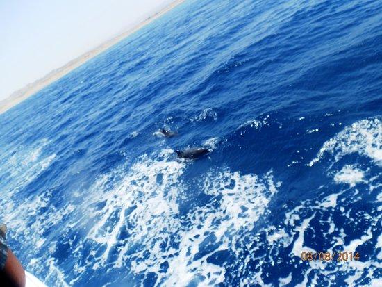Jaz Lamaya Resort: Dolphins