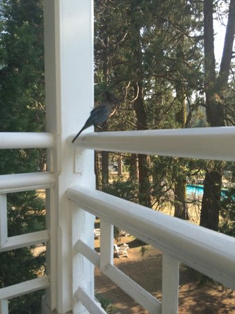 Wawona Hotel: Plenty of Wildlife