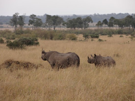 Governor's Camp Day Tours: Black rhino - saw 5 of them