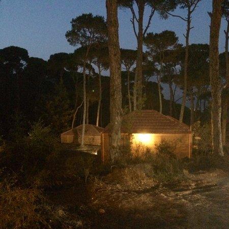 La Maison de la Foret : La Maison de la Forêt