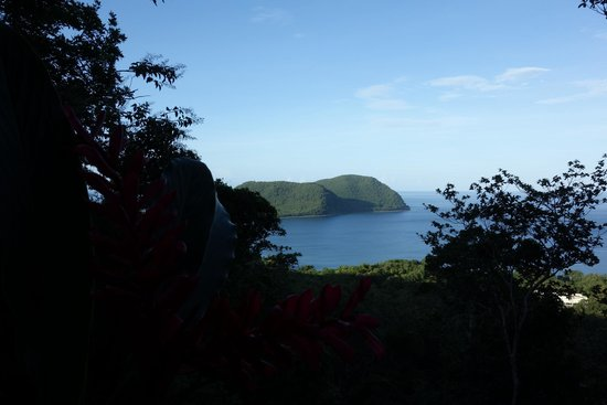 Manicou River : View from our tree house