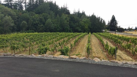 Hood River, OR: Some of the vineyard