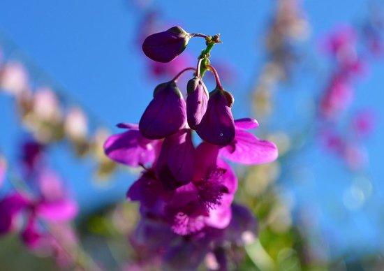 Kirstenbosch National Botanical Garden: 綺麗な花が咲いています