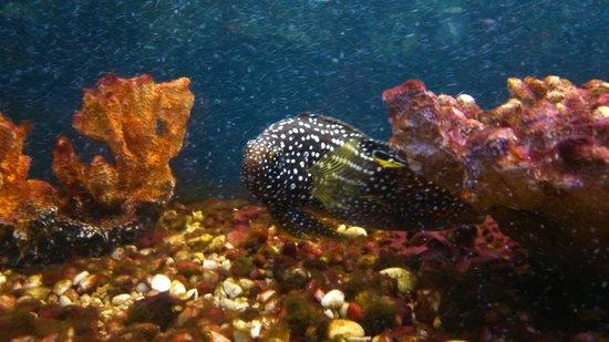 Sevastopol Aquarium