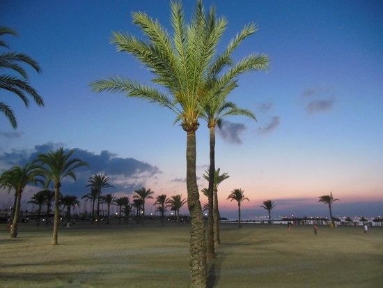 Hotel Palma Mazas: beach