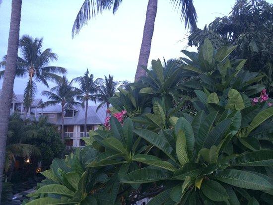 Margaritaville Key West Resort & Marina: Beautiful!