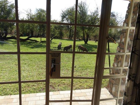 Ilala Lodge : Warthogs