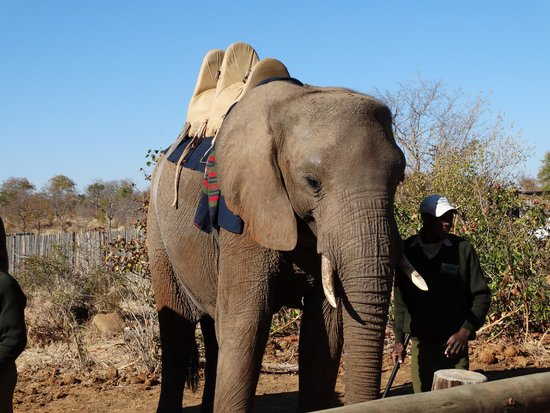 Ilala Lodge: Elephant Safari
