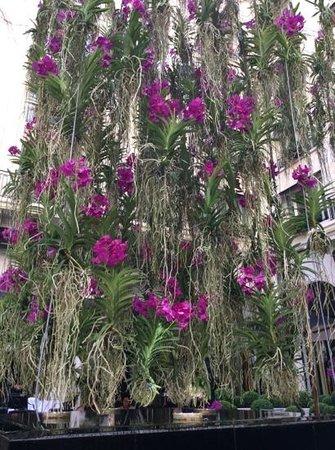 Le Cinq: jardin suspendu dans la cour de l hotel