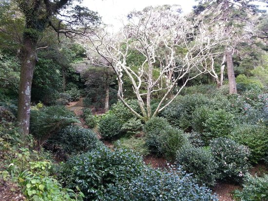 Wellington Botanic Garden: Very picturesque