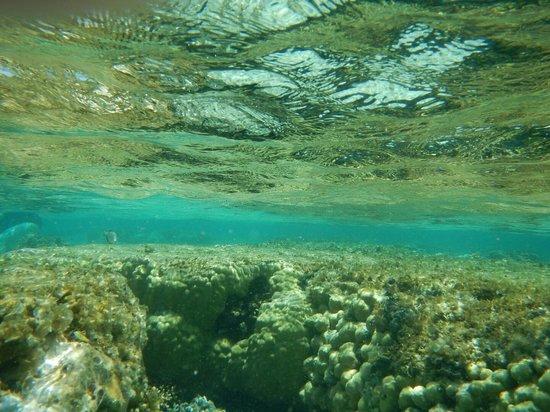 Resta Reef Resort: corals