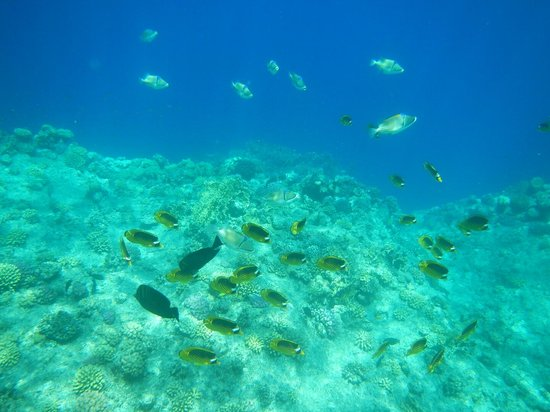 Resta Reef Resort: fishes and corals