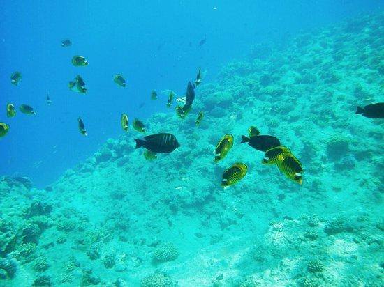 Resta Reef Resort: fishes