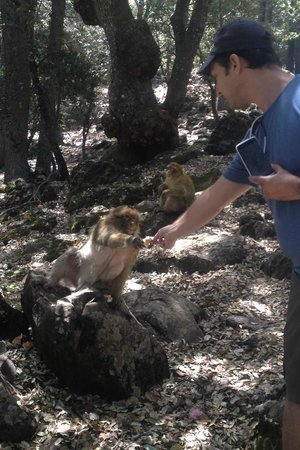 Morocco Trip Adventure: Feeding the barbary apes in the Atlas Mountains