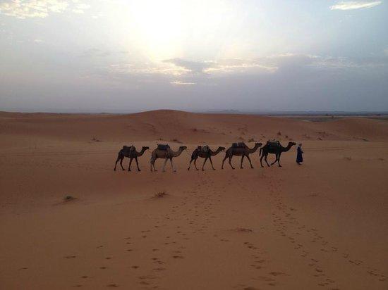 Morocco Trip Adventure: Camel Trekking in the Sahara Desert
