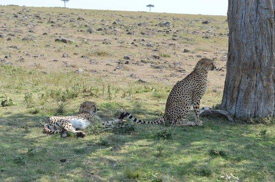 Offbeat Mara Camp: Wildlife