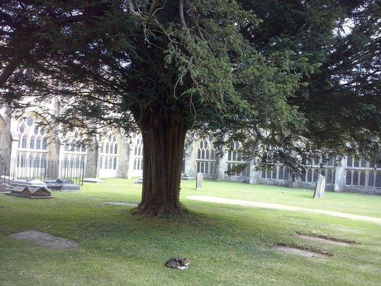 The Bishop's Palace and Gardens: Árbol en verano...imperturbable y bondadoso