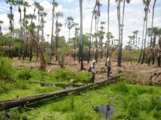 Ipanguacu: Carnaubais