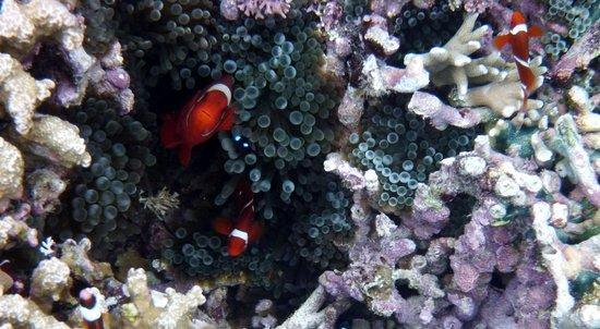 Uepi Island Resort : Nemo