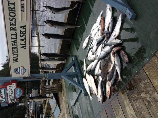 Waterfall Resort Alaska: OH did I mention fishing ??