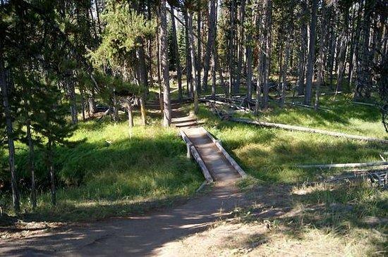 Storm Point Trail: Trail bridge