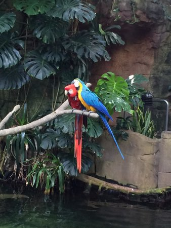 Moody Gardens: Birds in the Rainforest Pyramid.