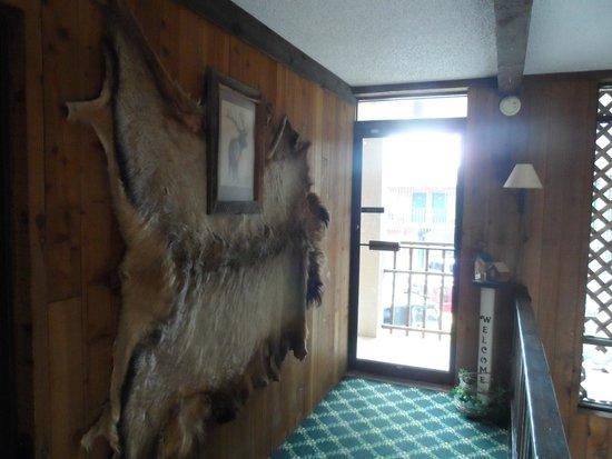 Bear Lodge Motel: Galery